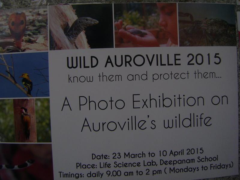 Photographer:Alena   Wild Auroville