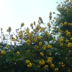 blossoming Auroville