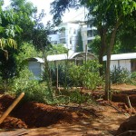 Urban Farming at Citadines