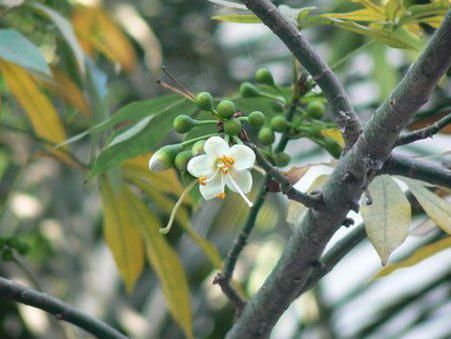 Photographer:www.blossomlikeaflower.com | Material Enterprises (Ceiba pentandra