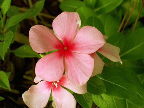 Photographer:www.blossomlikeaflower.com   Constant Progress in Matter