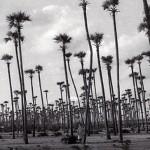 Auroville 1978