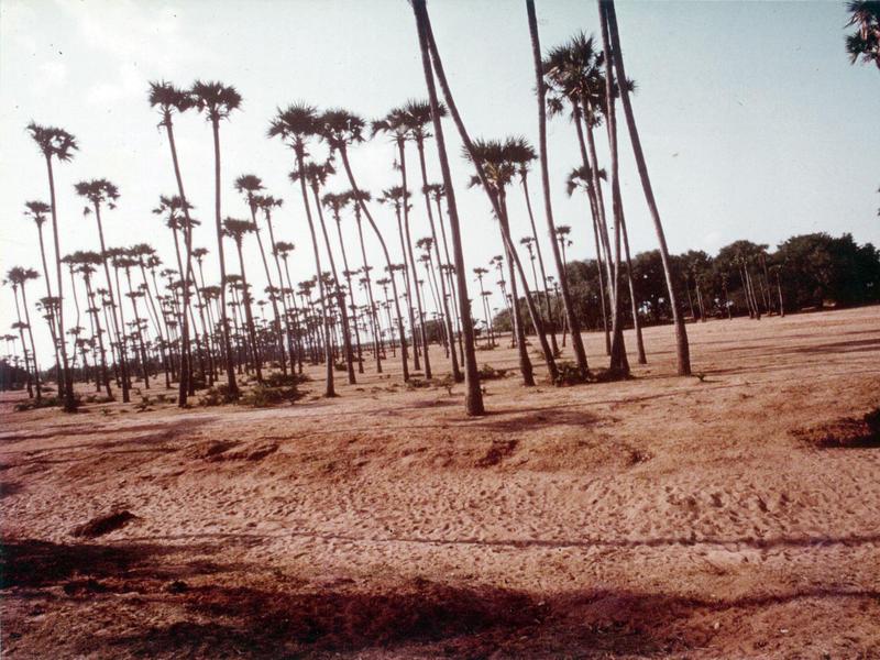 Photographer:Auroville Archives | Auroville 1978