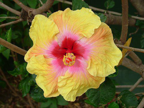 Photographer:www.blossomlikeaflower.com | Firmness of the New Creation (Firmness of Auroville)