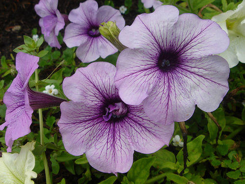 Photographer:www.blossomlikeaflower.com | Enthusiasm in Higher Vital (