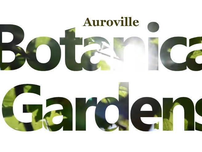 Photographer:web   Botanical Gardens 15th Brithday