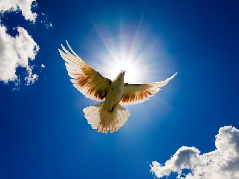 Photographer:web | World Peace Day