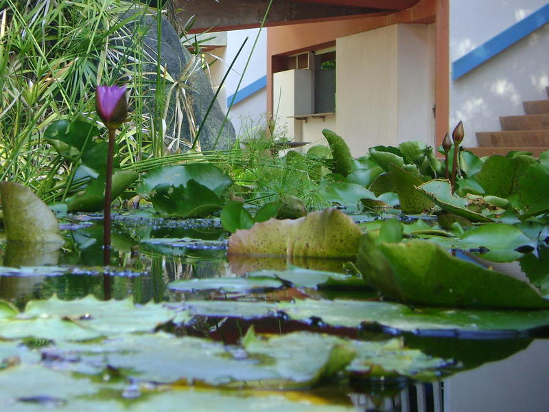 Photographer:web | water lilly at town hall