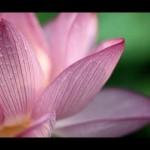 <b>Chakra Meditation's Music</b>