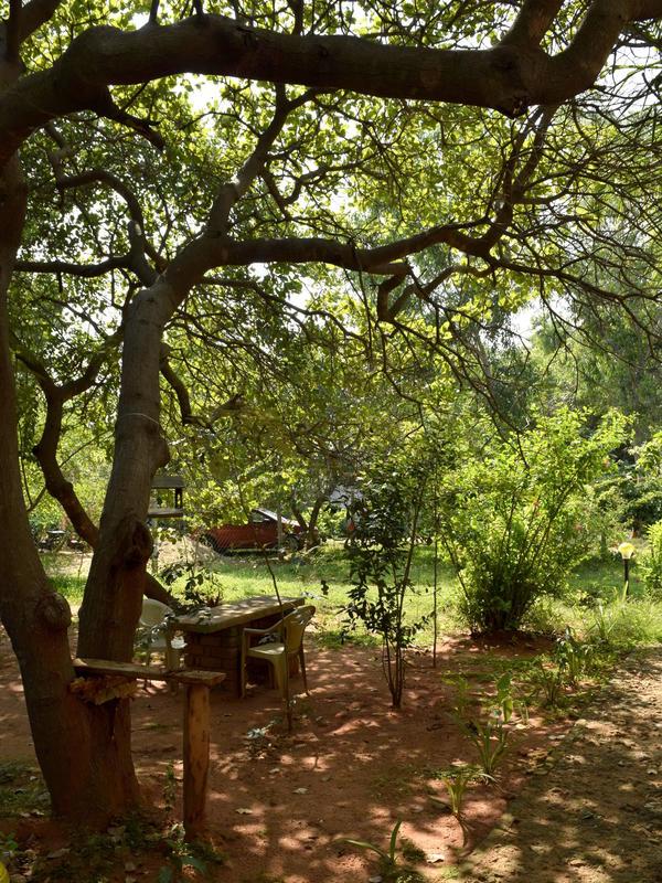 Photographer:Samira Bose | Garden view