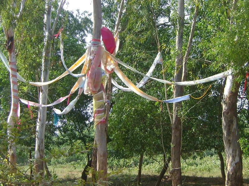 Photographer:Biliana | installation at eucaliyptus groove