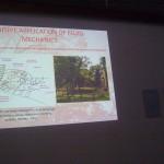A presentation slide