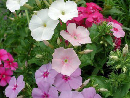 Photographer:Blossomlikeaflower.com | Skill in Works  (