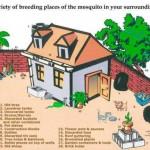 breeeding spaces of mosquitos