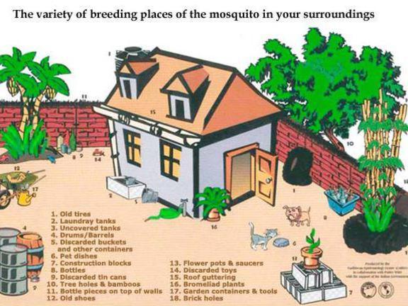 Photographer:web | breeeding spaces of mosquitos