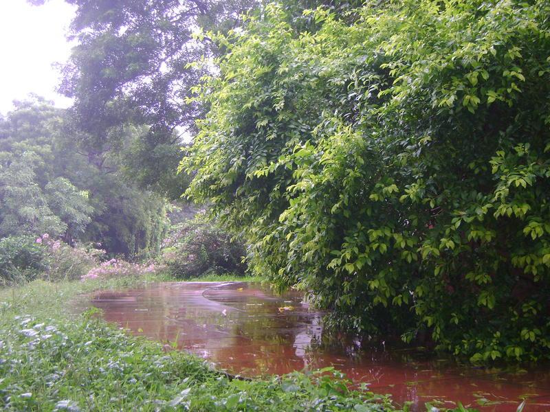 Photographer:Alea | localized Tstorms and rain