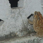 No idea how this toad climbed up to my terrace