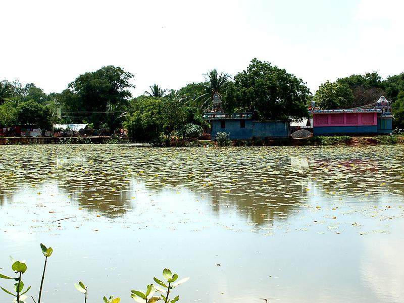 Photographer:Frida   Kuyillapalayam Lake after the big rain