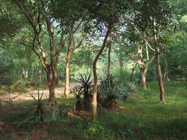 Photographer:Laurent Sauerwein | Auroville forest