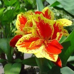 Connection between the Light and Physical (Canna Xgeneralis)