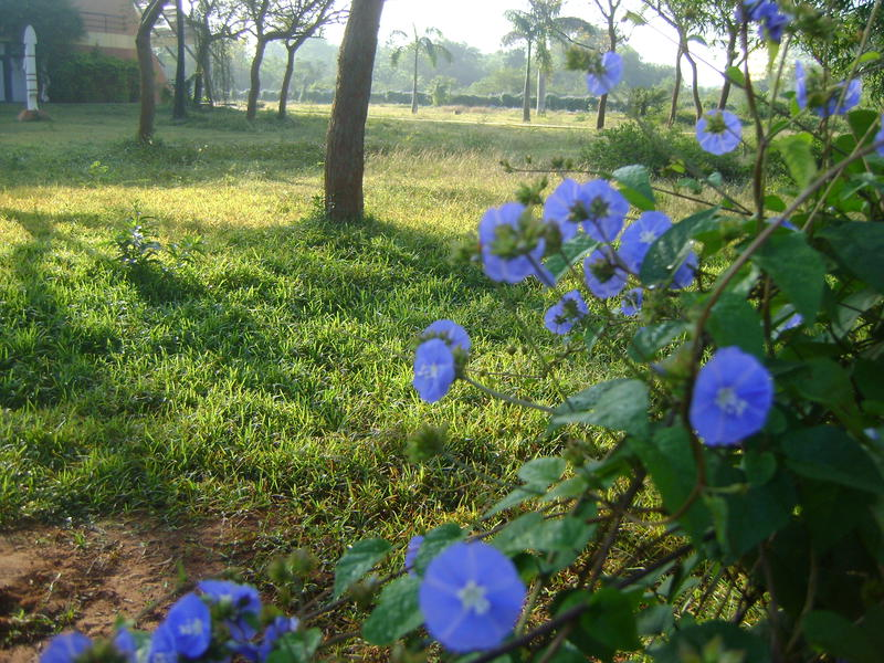 Photographer:Amadea | early sunny morning
