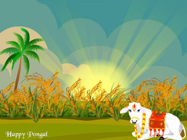 Photographer:web | Happy Pongal