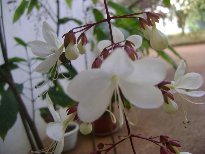 Photographer:web | Citadines plants
