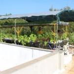 Rooftop Farming in Auroshilpam, Auroville