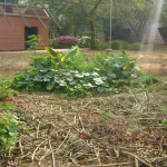 Permaculture Garden at Town Hall