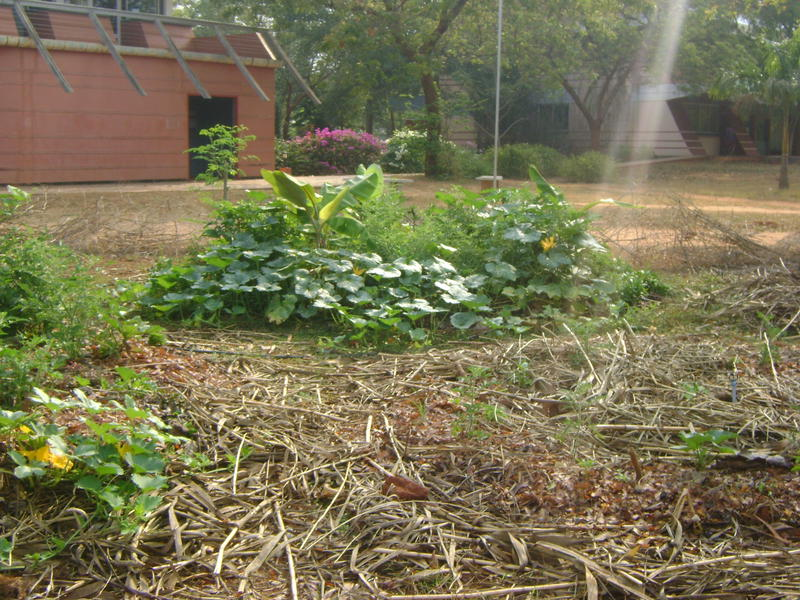 Photographer:Zala | Permaculture Garden at Town Hall
