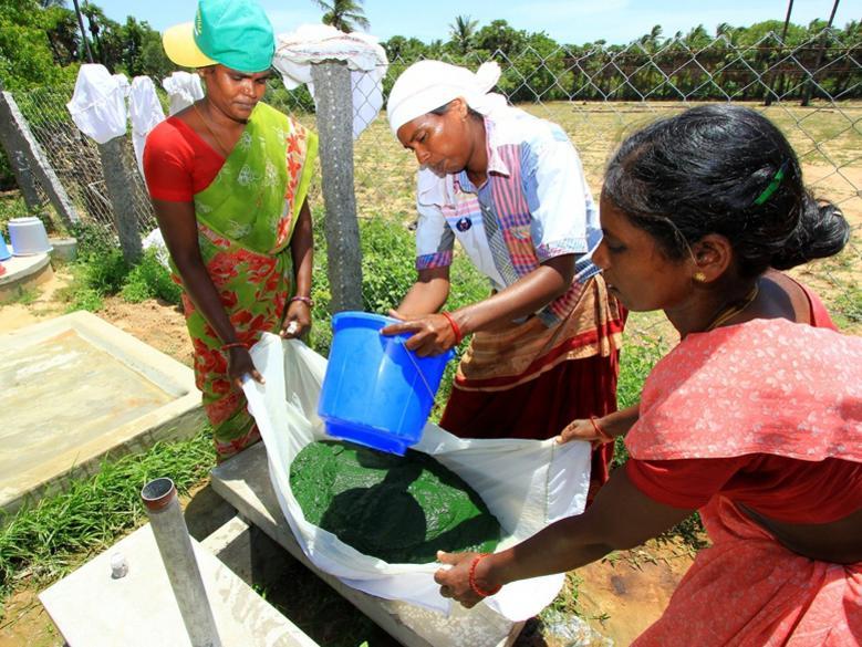 Photographer:Unltd Tamil Nadu | Evergreen Spirulina