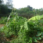 permaculture at Town Hall