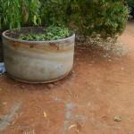Batteries in flower pot