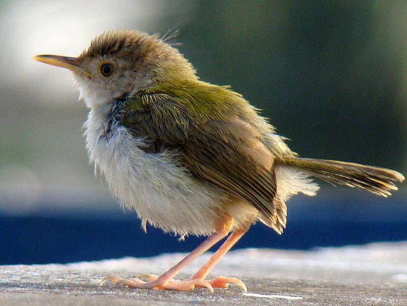 Photographer:web | Tailorbird