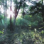 evergreen tropical dry forest in Auroville