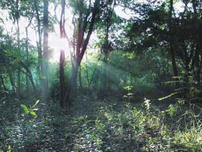 Photographer:web | evergreen tropical dry forest in Auroville