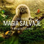 Eco film fest at MMC on 16th Colombia Wild Magic