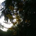 evening trees