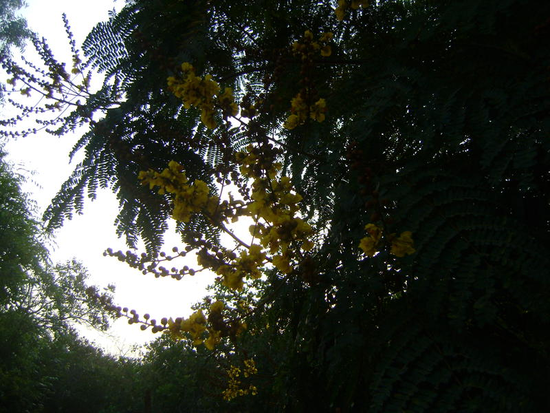 Photographer:Barbara | evening trees