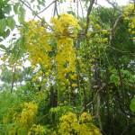 June  blossomings