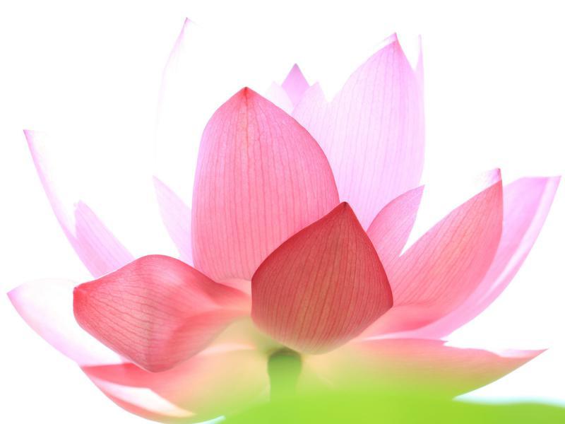 Photographer:web | lotus