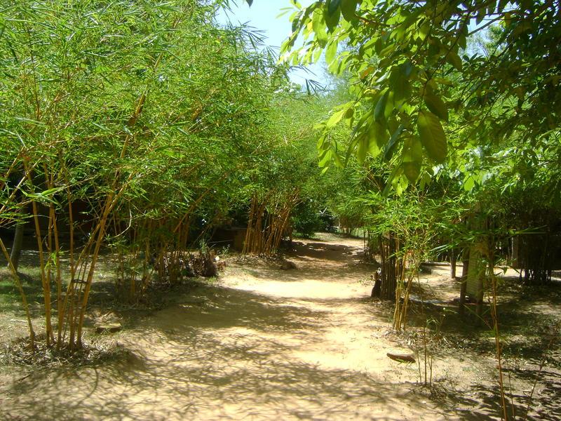 Photographer:Amadea | Auroville Bamboo Centre