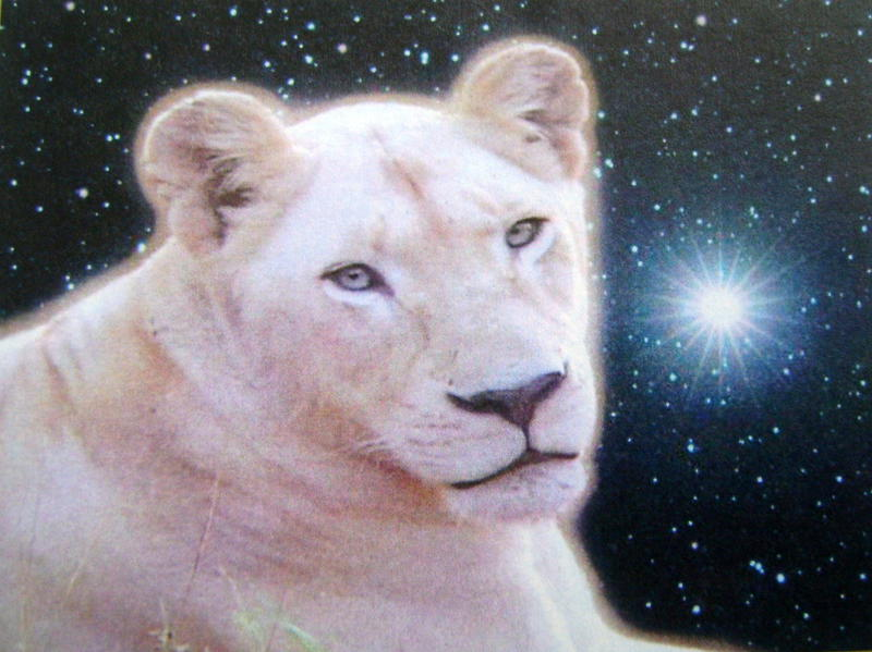 Photographer:Cedona Holly | white lioness