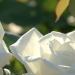 Integral Divine Love