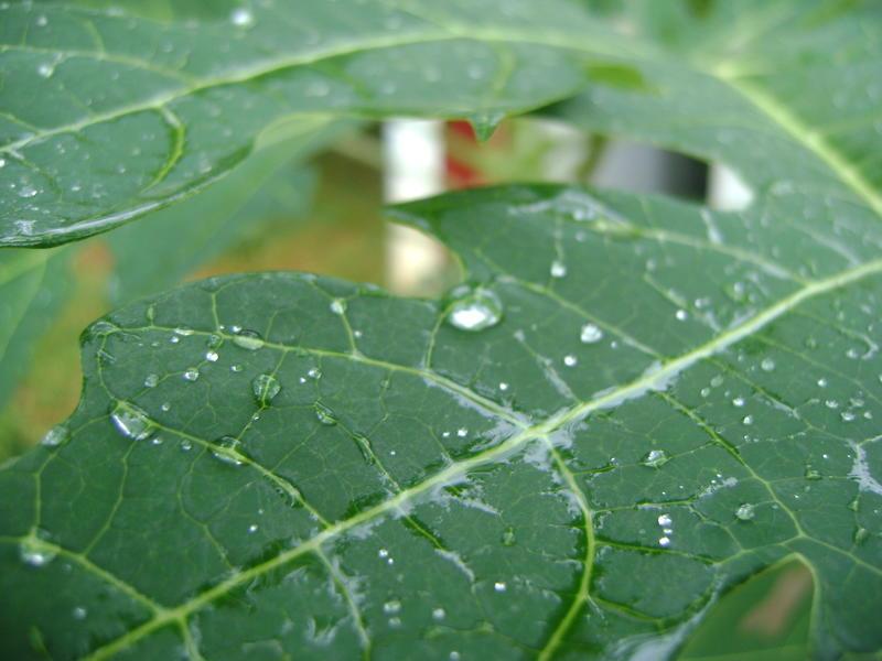 Photographer:Hannah   after rain