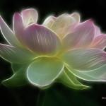 Sri Aurobindo's Lotus