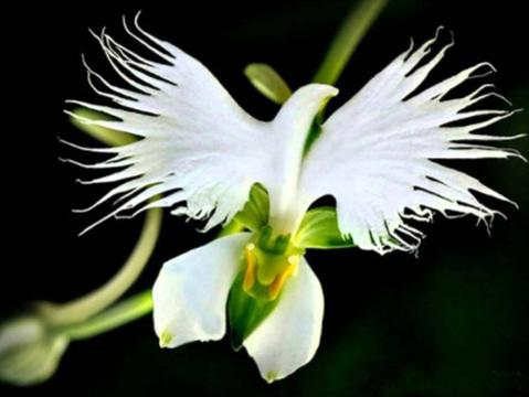 Photographer:web | orchid