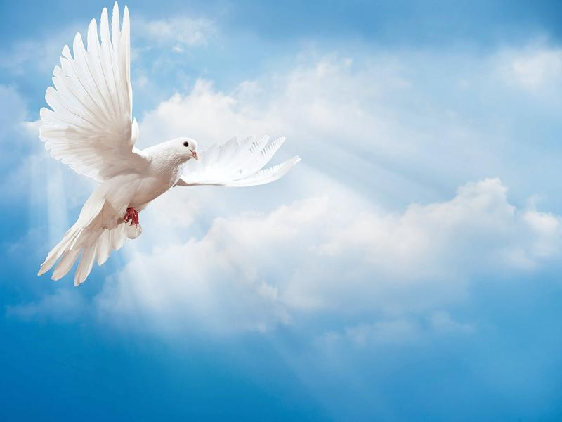 Photographer:web | International  Day of Peace