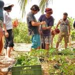permaculture workshop