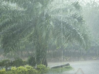 Photographer:Lana | mosnoon rain
